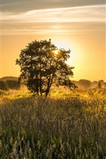 Preview iPhone wallpaper Summer field, trees, sunrise, morning