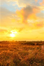 Preview iPhone wallpaper Sunset, yellow sky, clouds, grass