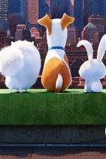 Preview iPhone wallpaper The Secret Life of Pets