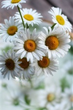 Preview iPhone wallpaper White flowers, chamomile, bokeh