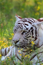 Preview iPhone wallpaper White tiger, predator, wildflowers