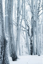 Preview iPhone wallpaper Winter, forest, trees, white snow