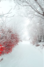 Preview iPhone wallpaper Winter, morning, snow, trees, red leaves, path