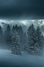 Preview iPhone wallpaper Winter night, forest, trees, mountains, snow