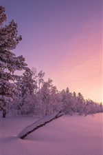 Preview iPhone wallpaper Winter, snow, trees, dusk, sunset