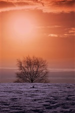 Preview iPhone wallpaper Winter sunset, field, tree, red sky