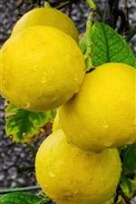 Preview iPhone wallpaper Yellow citrus