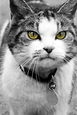 Preview iPhone wallpaper Yellow eyes cat front view