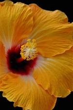 Preview iPhone wallpaper Yellow hibiscus flower, petals