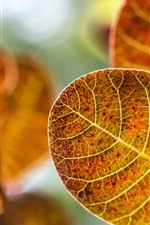 Preview iPhone wallpaper Yellow leaves, autumn, blur background