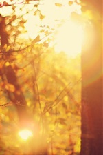 Preview iPhone wallpaper Autumn, forest, trees, glare sun rays