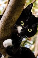 Preview iPhone wallpaper Black kitten, tree, blur background