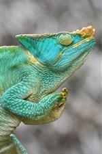 Preview iPhone wallpaper Chameleon, green lizard, blurry background