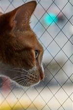 Curioso, gato, olhar, saída, Janela