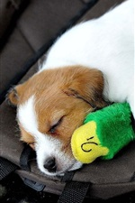 Preview iPhone wallpaper Cute puppy and toy sleep
