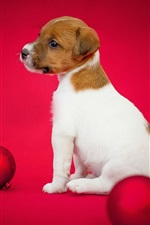 Dog and Christmas balls, puppy, red background