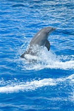 Dolphins out water, show time