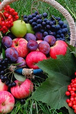 Preview iPhone wallpaper Fruits, grass, grapes, apples, plums, berries, flowers