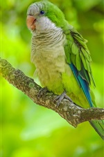 Preview iPhone wallpaper Green feather parrot, bird, tree