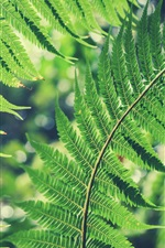 Preview iPhone wallpaper Green fern leaves