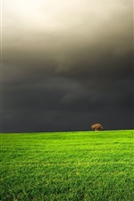 Preview iPhone wallpaper Green field, black clouds, tree