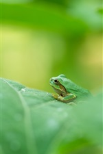 Preview iPhone wallpaper Green frog, green leaf, blurry