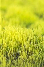 Preview iPhone wallpaper Green grass, fresh, spring