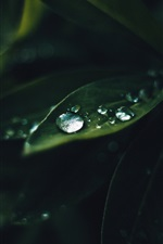 Preview iPhone wallpaper Green leaf, dew, plant macro photography