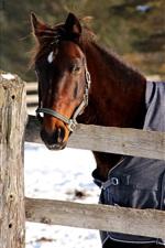 Cavalo no inverno, rosto, cerca, cobertor, neve