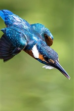 Preview iPhone wallpaper Kingfisher flight, wings, blue feathers, bird