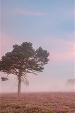 Morning, flowers field, tree, fog