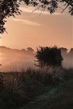 Preview iPhone wallpaper Morning nature, trees, grass, path, fog, sunrise