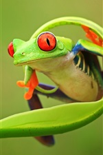 Preview iPhone wallpaper Nature animals, frog, leaf