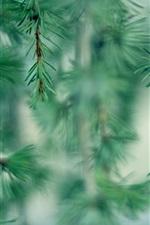 미리보기 iPhone 배경 화면 바늘, 나뭇 가지