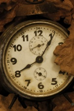 Old clock, leaves
