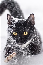 Preview iPhone wallpaper One black cat in the snow