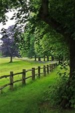 Park, tree, fence, grass, nature
