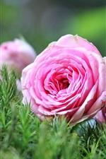 iPhone壁紙のプレビュー ピンクのバラ、花、花束