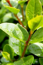Preview iPhone wallpaper Plants, after rain, green leaves, water droplets, sunlight