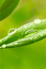 Preview iPhone wallpaper Plants, green leaves, dew