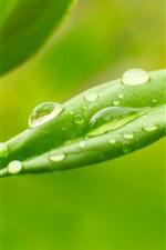 Plants, green leaves, dew