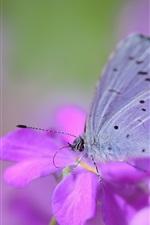 미리보기 iPhone 배경 화면 자주색 꽃과 나비