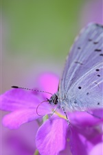 Flores e borboletas roxas