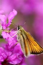 Flores roxas, borboleta, bokeh