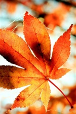Preview iPhone wallpaper Red maple leaf, tree, twigs, autumn