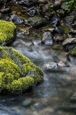 Córrego, água, pedras, musgo