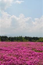 Preview iPhone wallpaper Summer, pink flowers field