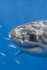 Preview iPhone wallpaper Underwater, sea, shark, fish