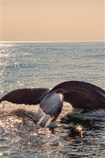 Preview iPhone wallpaper Whale tail out water, sea, glare