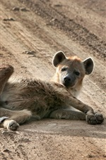 Preview iPhone wallpaper Wild dog lying on ground